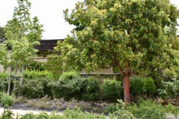 Landscape Management Division